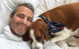 """Andy Cohen Dad Shamed For Letting Dog Eat His Son's Toy, Tells Critics """"Stand Down"""""""