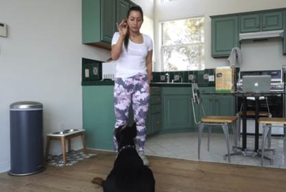 Brooke Houts Won't Face Charges Over Dog Video