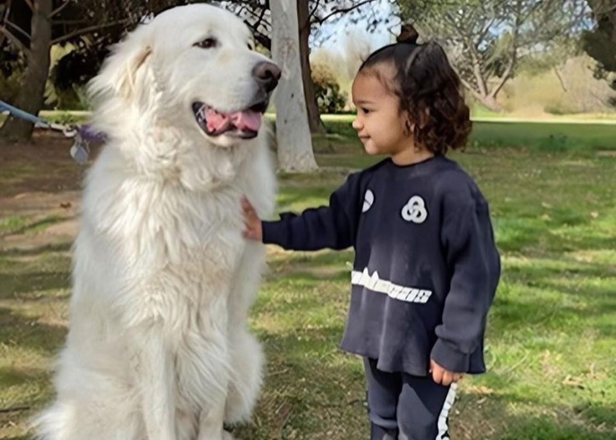 Kim Kardashian Shares Adorable Pictures Of Chicago West With A Huge White Dog — Chi Loves Doggies!