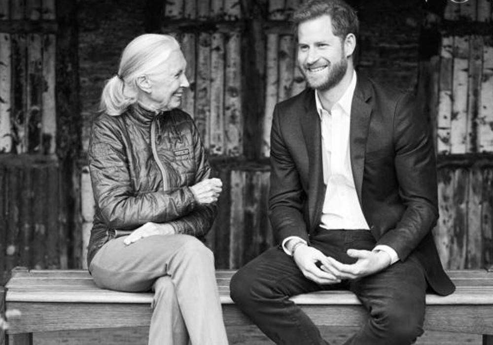 Prince Harry Is Finding His New Post-Royal Life To Be 'Quite Challenging,' According To Jane Goodall