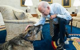 Joe Biden And Jill Biden Pay Heartwarming Tribute To Their Dog Champ After He Dies At Age 13